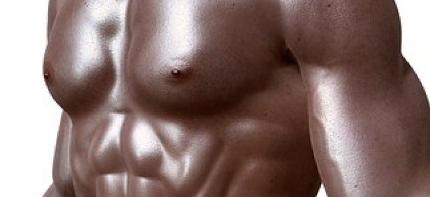 פעולת שרירי השלד
